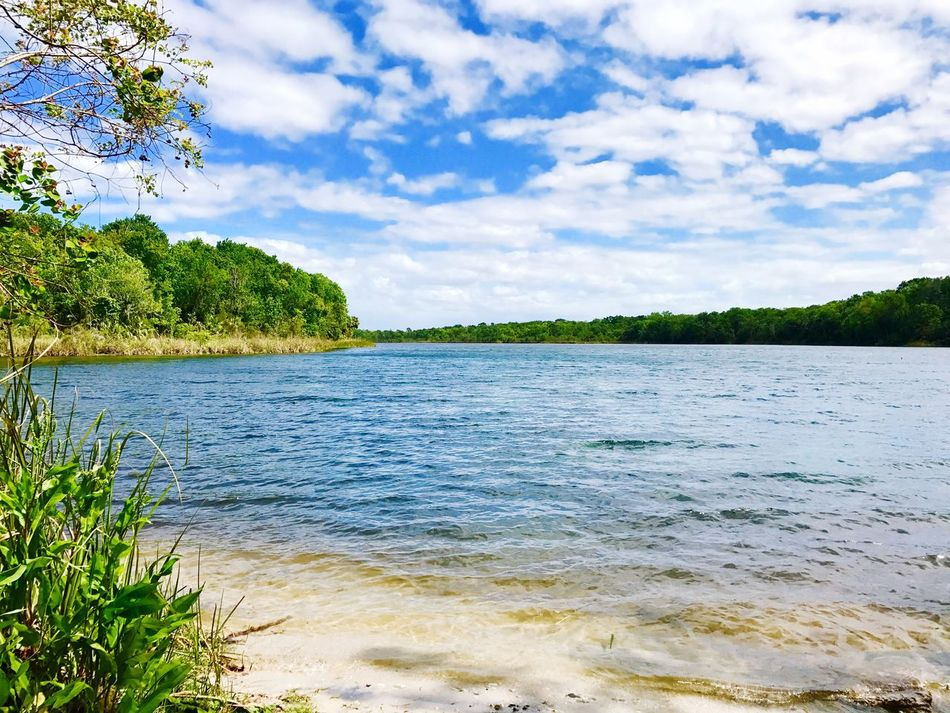 Beautiful Day Saltsprings Tree Nature Water Sky Outdoors Wilderness Landscape Scenics No People Day Natural Parkland