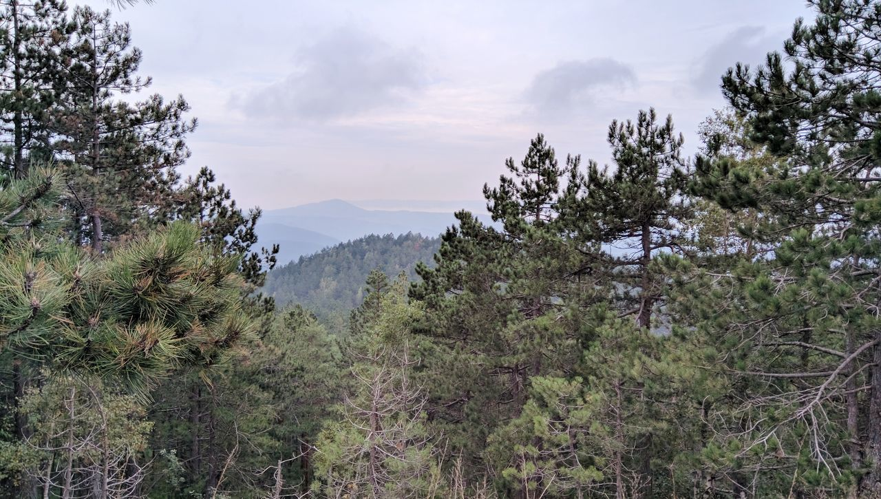 Pine Woodland Pine Tree Pinaceae Tree Forest Mountain Landscape Nature Beauty In Nature Social Issues Outdoors No People Lush - Description Day Trees Trees And Sky