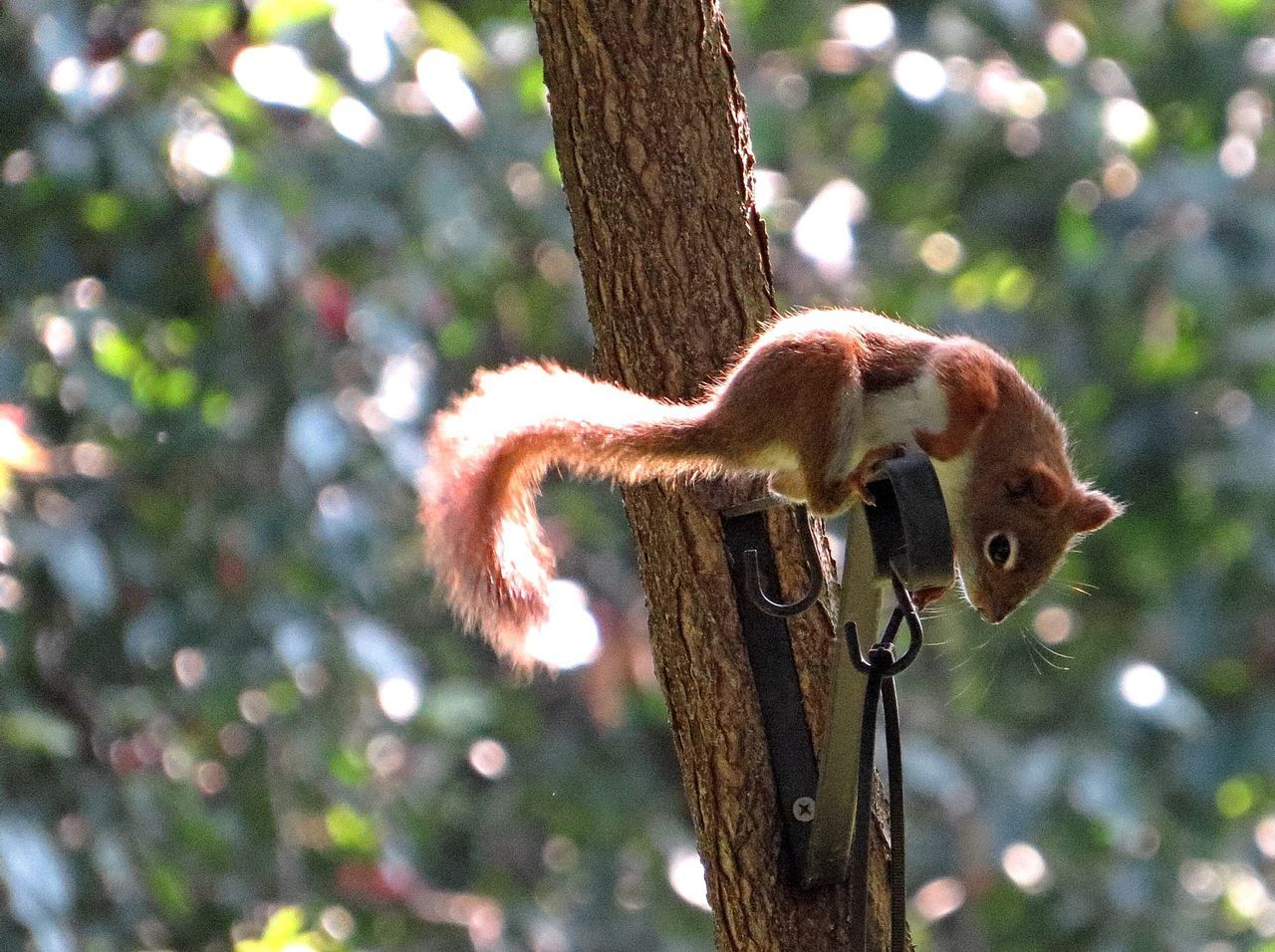 Beautiful stock photos of squirrel, Animal Themes, Animals In The Wild, Day, Focus On Foreground