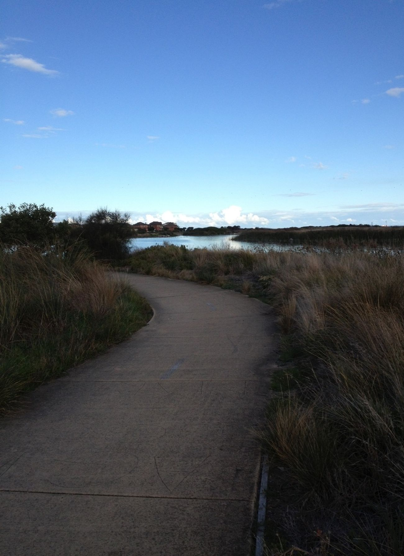Walking The Purist (no Edit, No Filter) NEM Landscapes