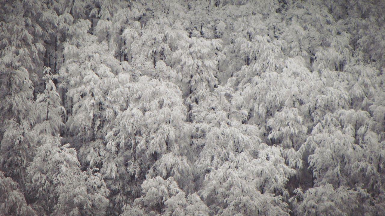 FULL FRAME SHOT OF SNOW COVERED TREES