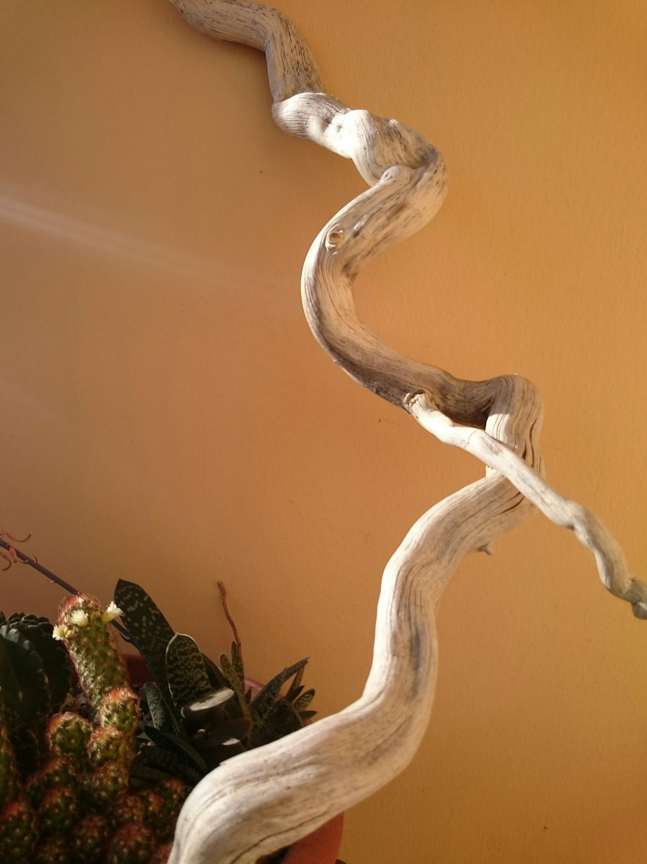 Wood Wood Art Natural Born Beauty