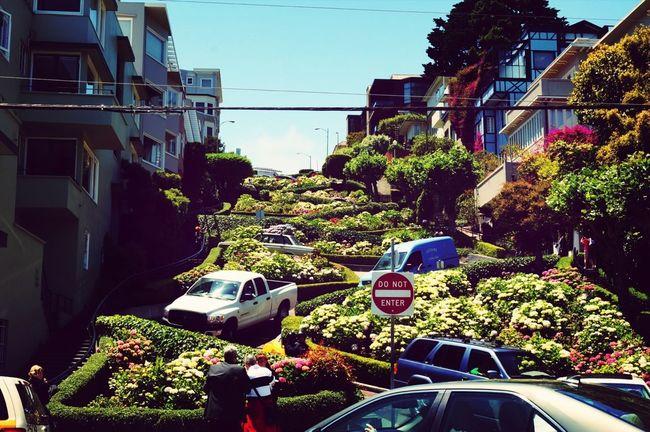 San Francisco Trip Photo Fotografia De Viaje Lombard St.