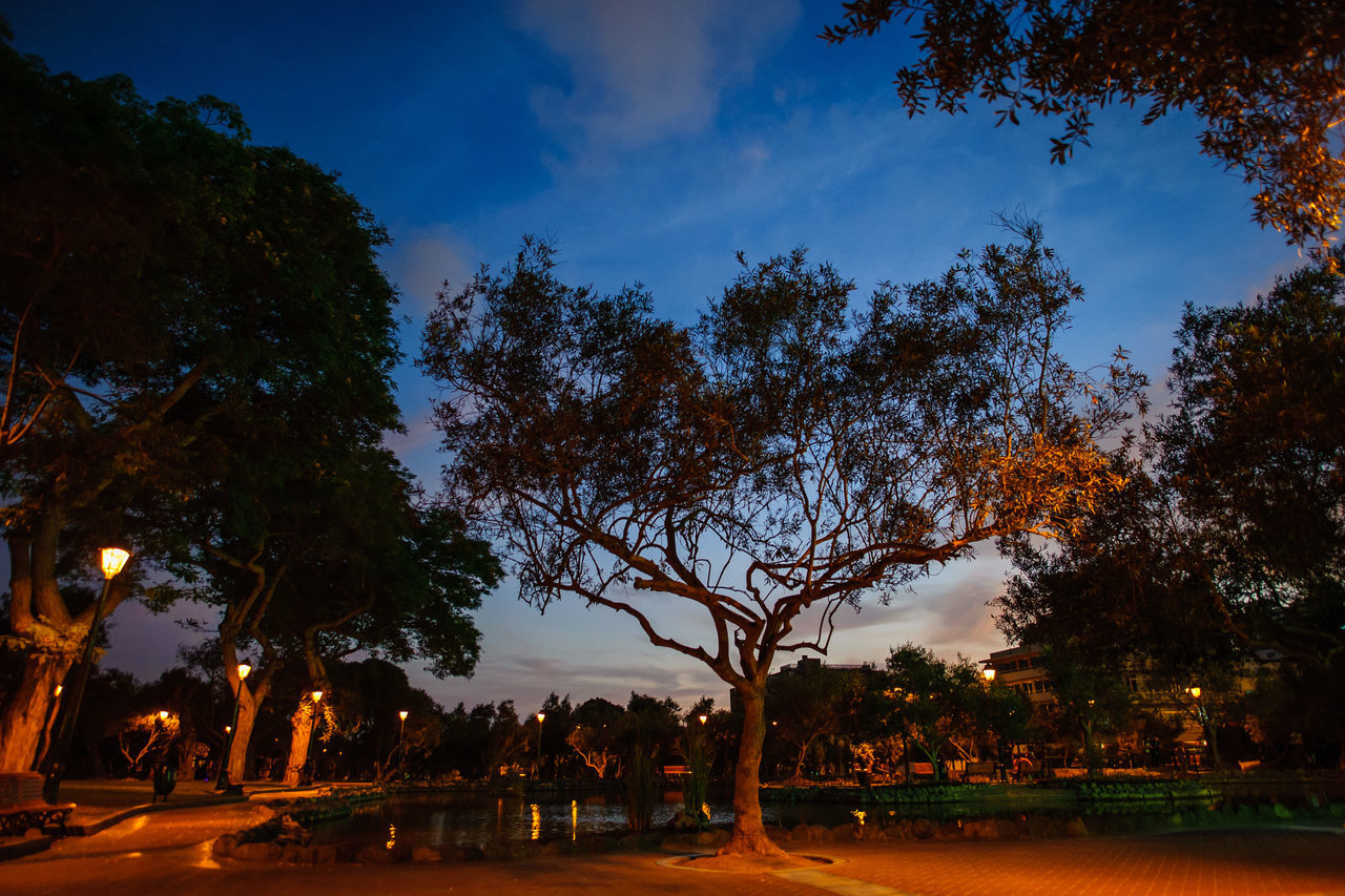 tree, sky, outdoors, nature, scenics, growth, beauty in nature, tranquility, sunset, branch, tranquil scene, tree trunk, silhouette, no people, night, water, illuminated, building exterior, city