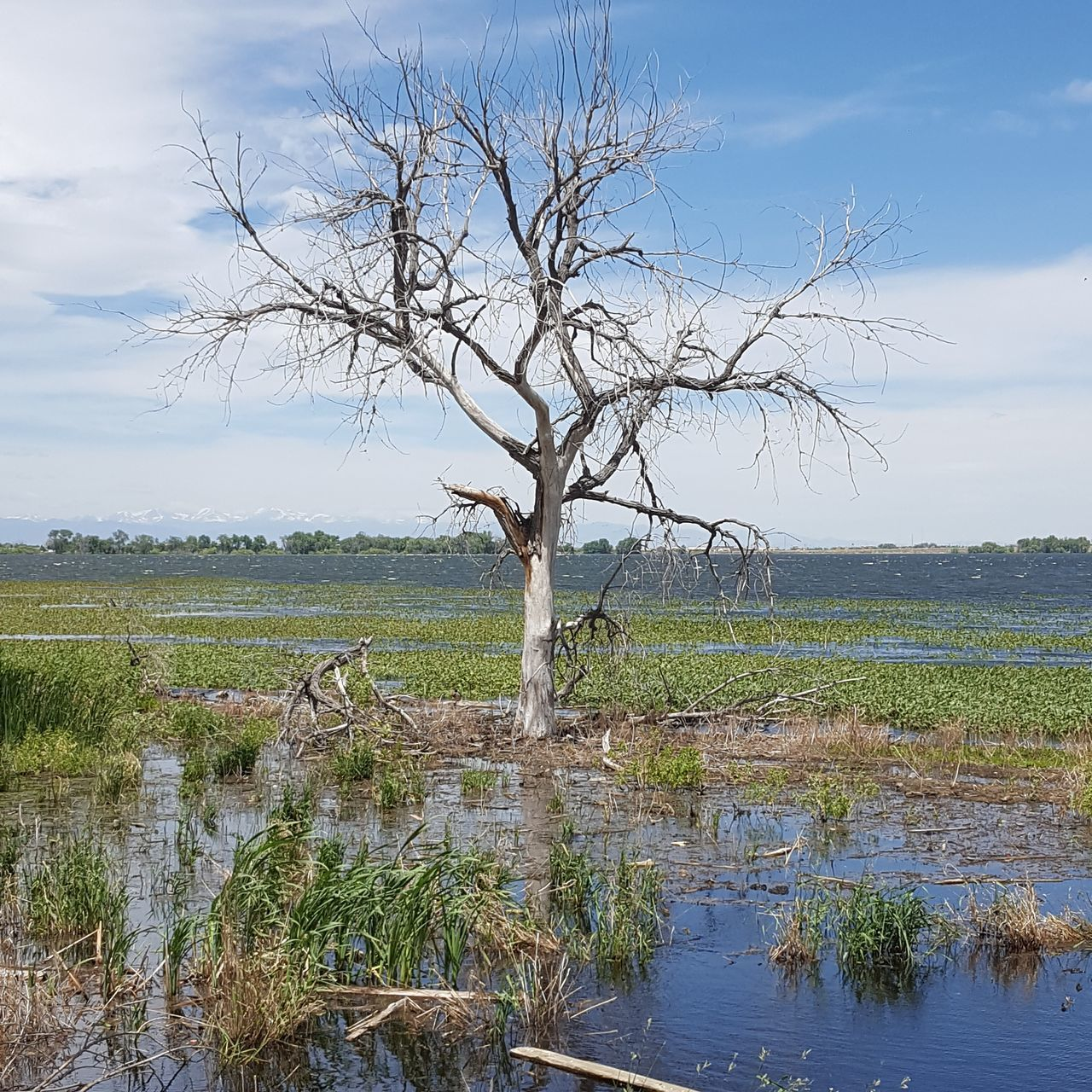 A dead tree at Barrlakestatepark Lake Tree Bluesky Beauty In Nature Landscape Water Bare Tree Horizon Over Water