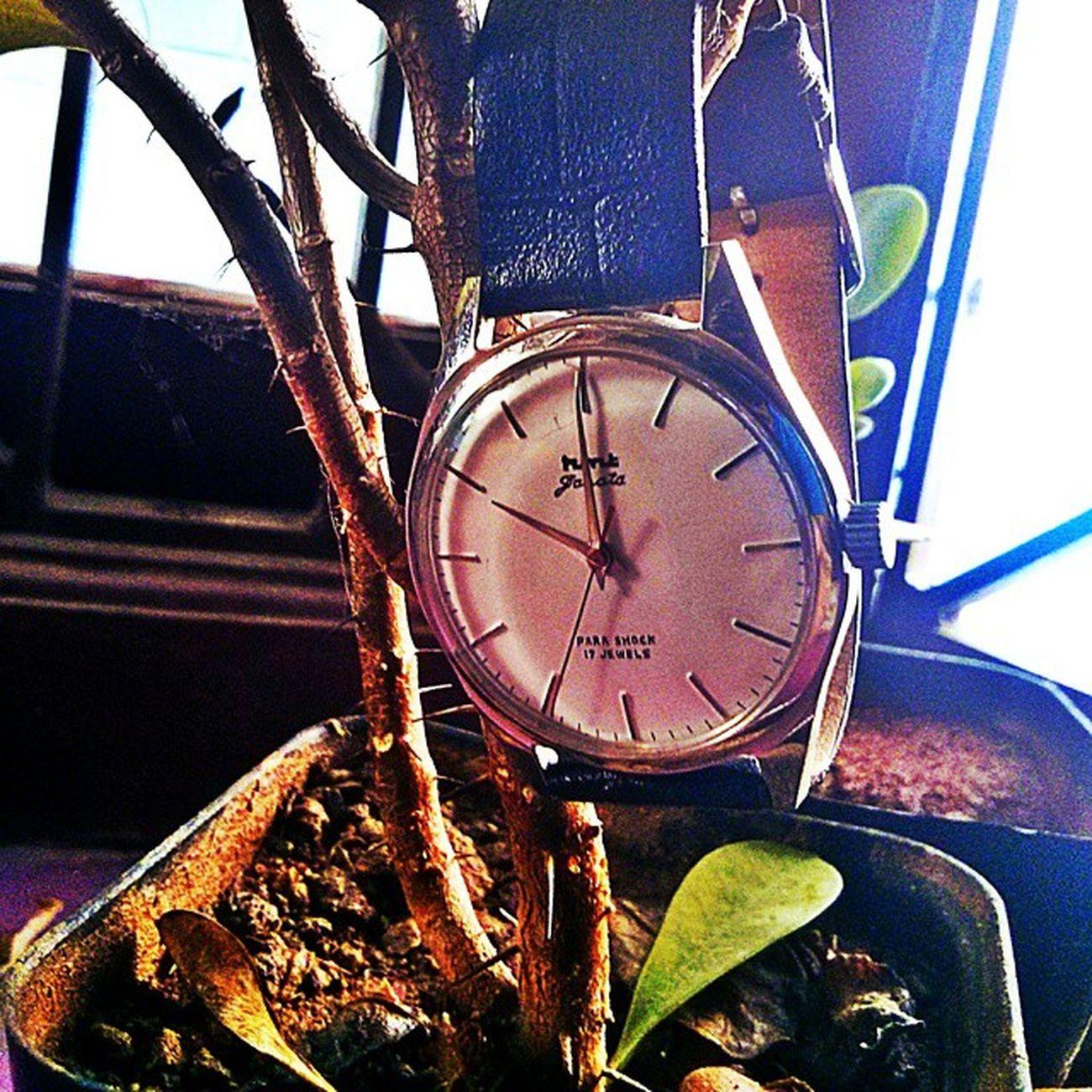 Wish i had a watch plant .... Hmtjanata HMT Watchesofinstagram Watchfinder Watchporn F4F Pondicherry Hmtlover