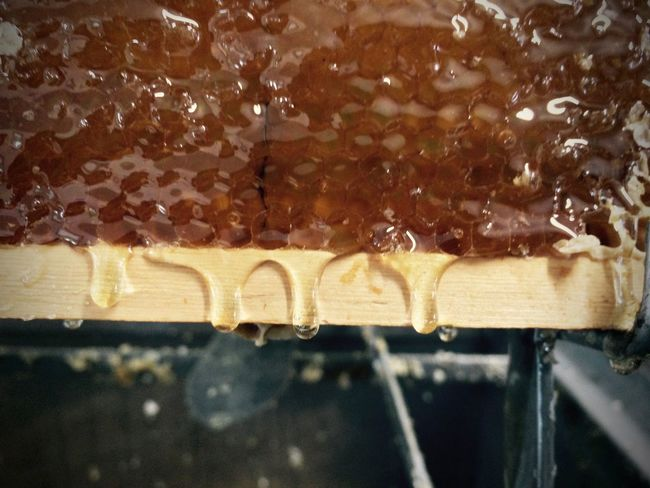 Close-up Dripping Honey Nature No People Tasty
