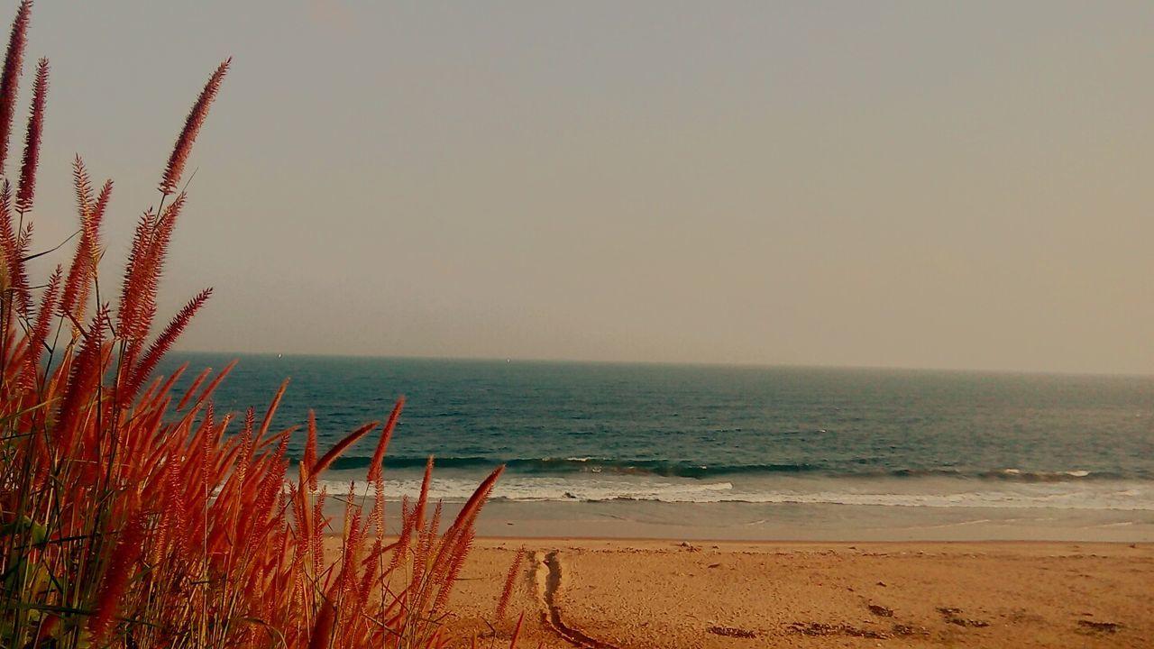 Beach Beachphotography Sea Ocean Ocean View Garden Flower Sand Shore No People Visakhapatnam Vizag Vizag Beach Vizag Beach View Beautiful India Beautifully Organized