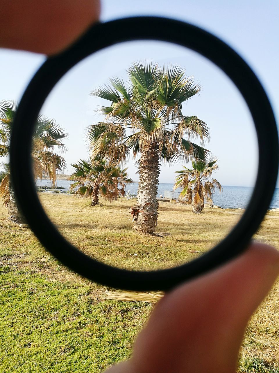 tree, real people, palm tree, magnifying glass, day, one person, nature, side-view mirror, sky, tree trunk, grass, landscape, beauty in nature, lifestyles, outdoors, fish-eye lens, close-up