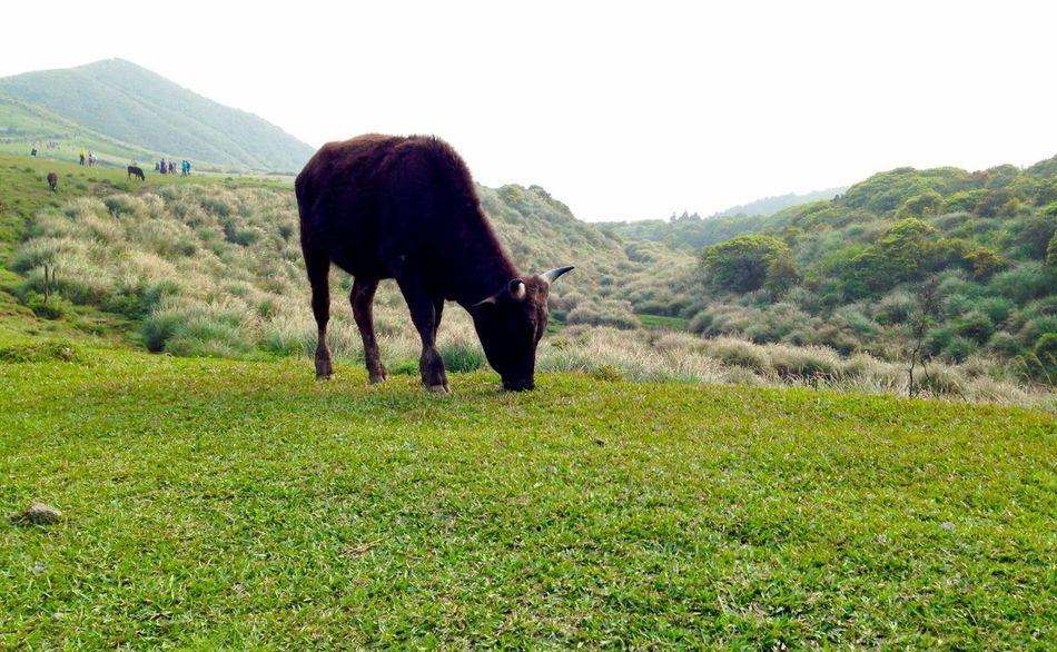 Green Animals Mountains