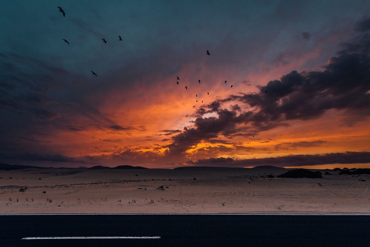 Traveling Desert Nature Sunset Bird Silhouette Tranquility Sky Atmosphere Flock Of Birds Landscape Landscape_Collection EyeEm Best Shots Fuerteventura Exploring Deserts Around The World Volcanic Landscape Photography Check This Out Eye Em Nature Lover EyeEm Gallery Photooftheday OpenEdit Photo Wide Angle