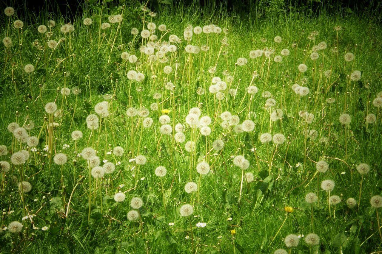 Grassland Soft Flowers Freshness Nature Outdoor Photography