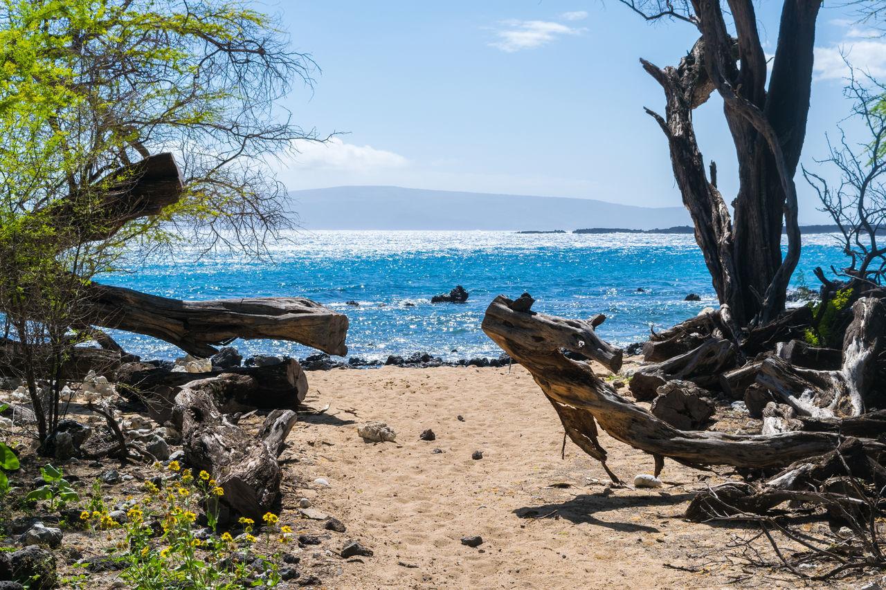 Private Beach Junglebeach Jungle Beach Maui Kings Trail