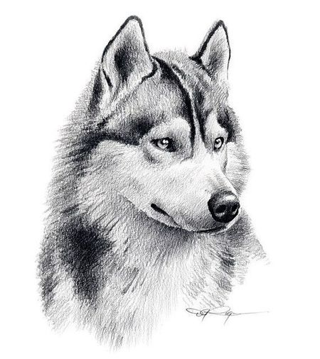 Dog White Background Pets Mammal Animal Themes Domestic Animals No People Close-up Day