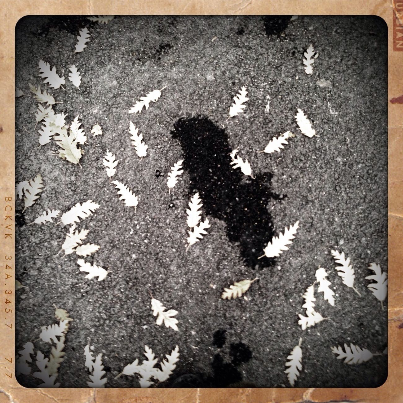 Leaves,nyc,tar,concrete, The End