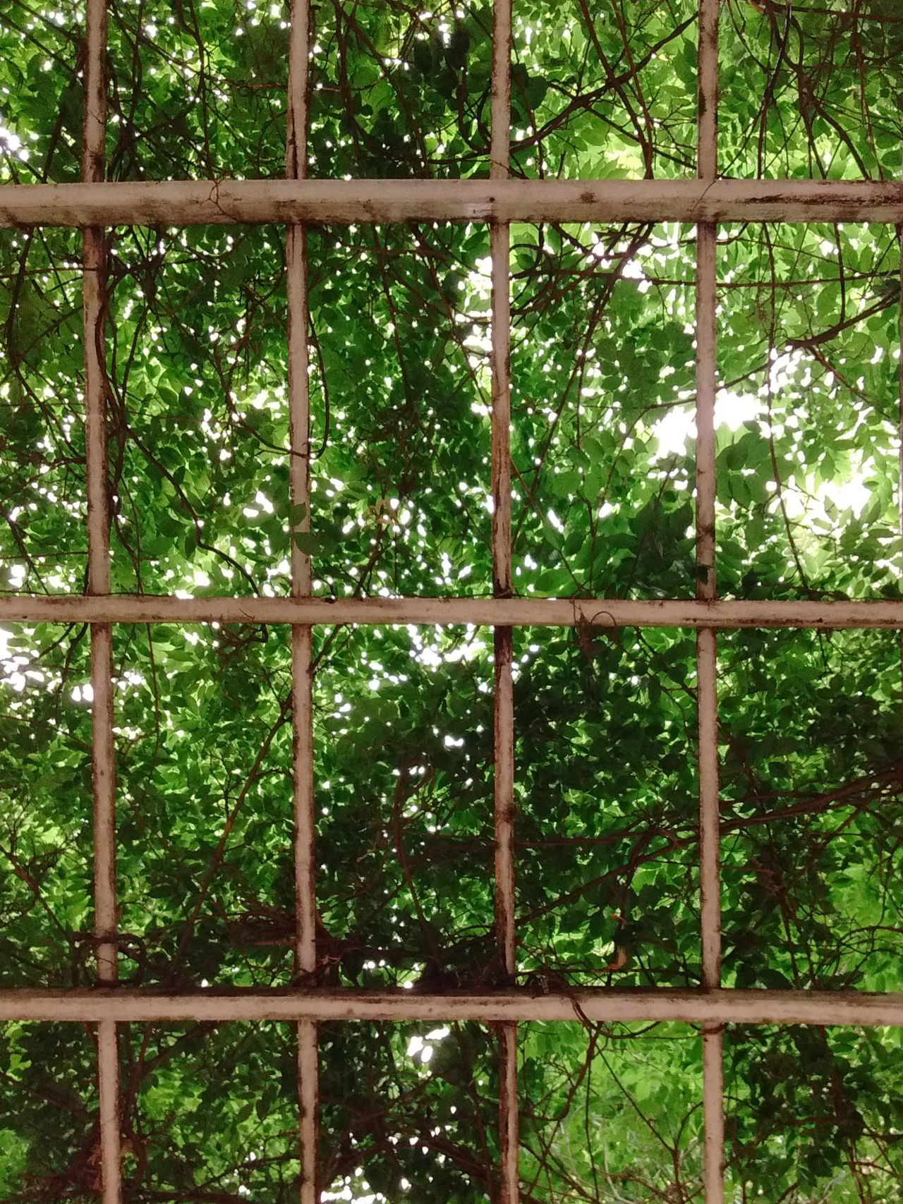 O telhado vive Backgrounds Day Full Frame Green Color Grid Nature No People Outdoors Pergola Sky Tree