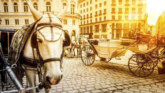 horse carriage in vienna austria Austria Carriage City Domestic Animals Evening Horse Horse Cart Horsedrawn Horses Light No People Outdoors Sun Transportation Vienna Working Animal