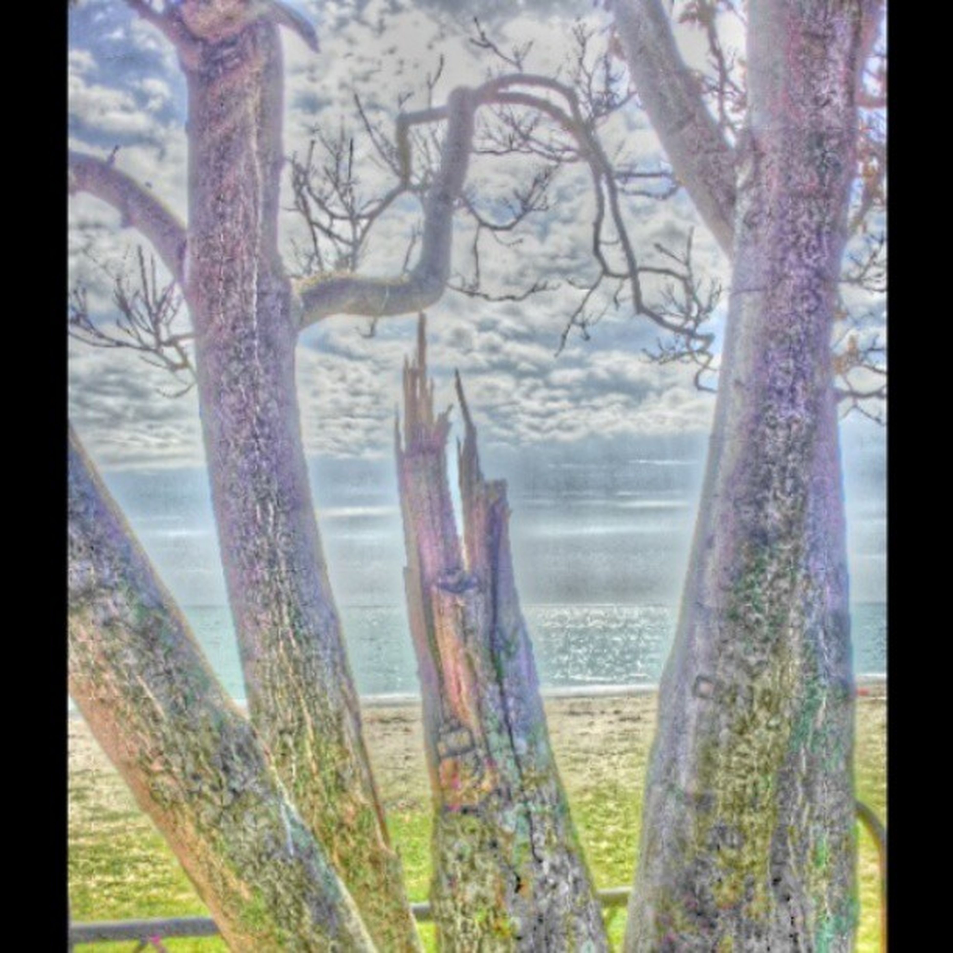 tree trunk, wood - material, tree, tranquility, tranquil scene, nature, water, scenics, grass, beauty in nature, branch, growth, wooden, day, fence, landscape, no people, field, outdoors, non-urban scene
