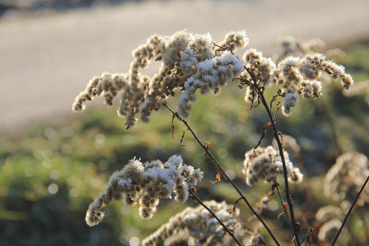 Nature Plant Close-up Outdoors Flower No People Day Beauty In Nature First Eyeem Photo Pflanze  Fotografie EyeEm Best Shots Canon Hobby Cold Temperature Winter Look At This Dezember 2016 EyeEm