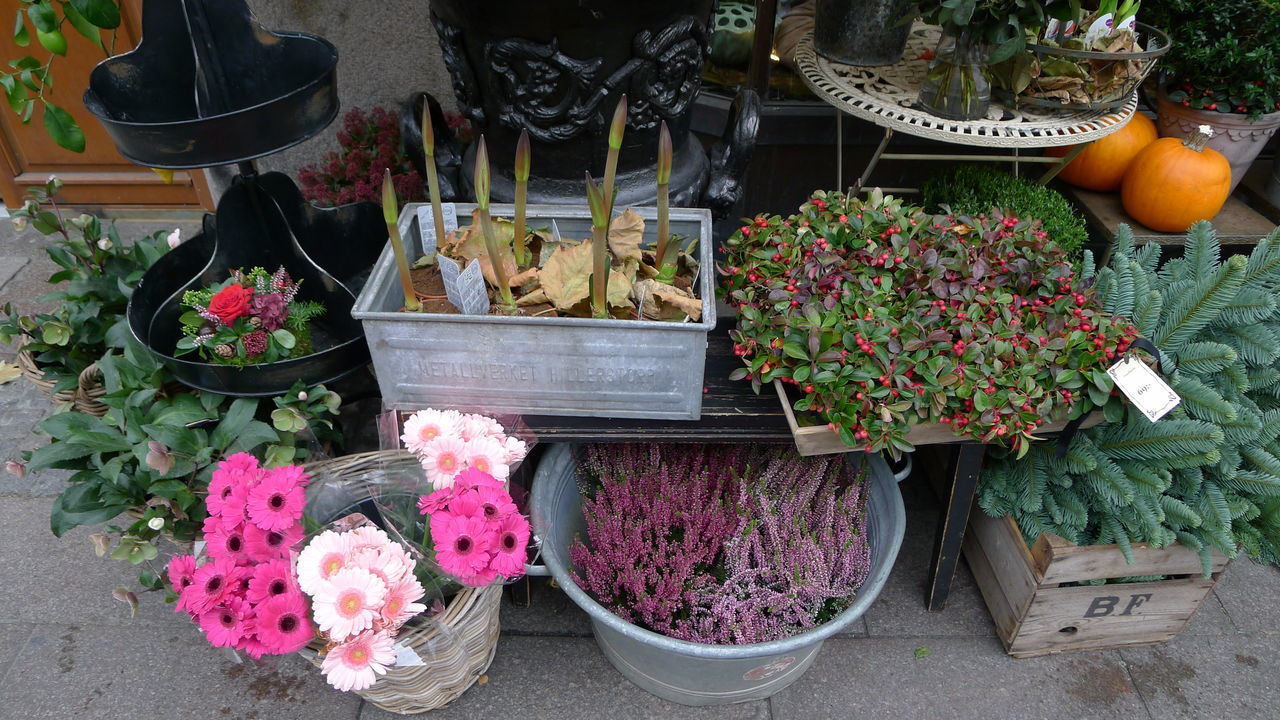 Day Flower Flower Shop Flowers For Sale Freshness Nature No People Outdoors Retail  Store Zinc