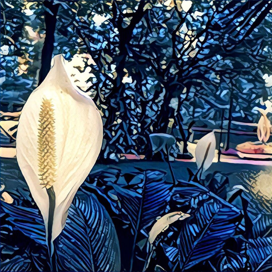Just Blòóming Blooming Flowers White Color Whiteflowerphotography Edited nature Nature_collection Natureedited Picoftheday Hello World Bestoftheday Best  Mobilephotography