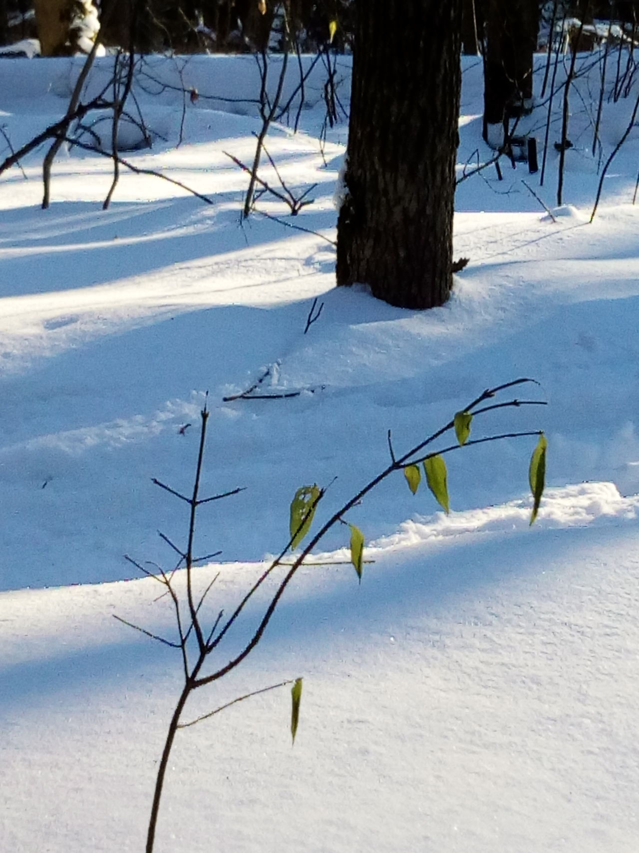 Winter Snow Cold Temperature Nature Tree Tranquility Outdoors Day Plant No People Tranquil Scene Branch Bare Tree Beauty In Nature Scenics Tree Trunk Nature_collection Frozen Tranquility Landscape Shadow The Great Outdoors - 2016 EyeEm Awards EyeEm Nature Lover Close-up Forest