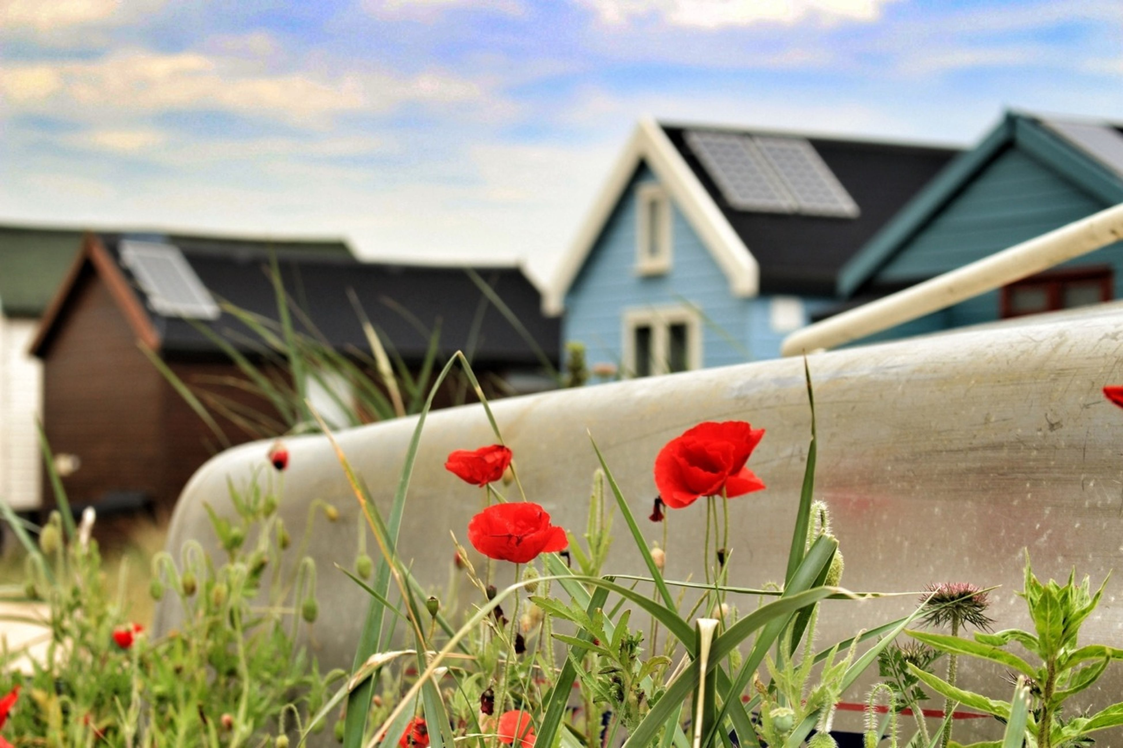 Beach Huts And Poppies