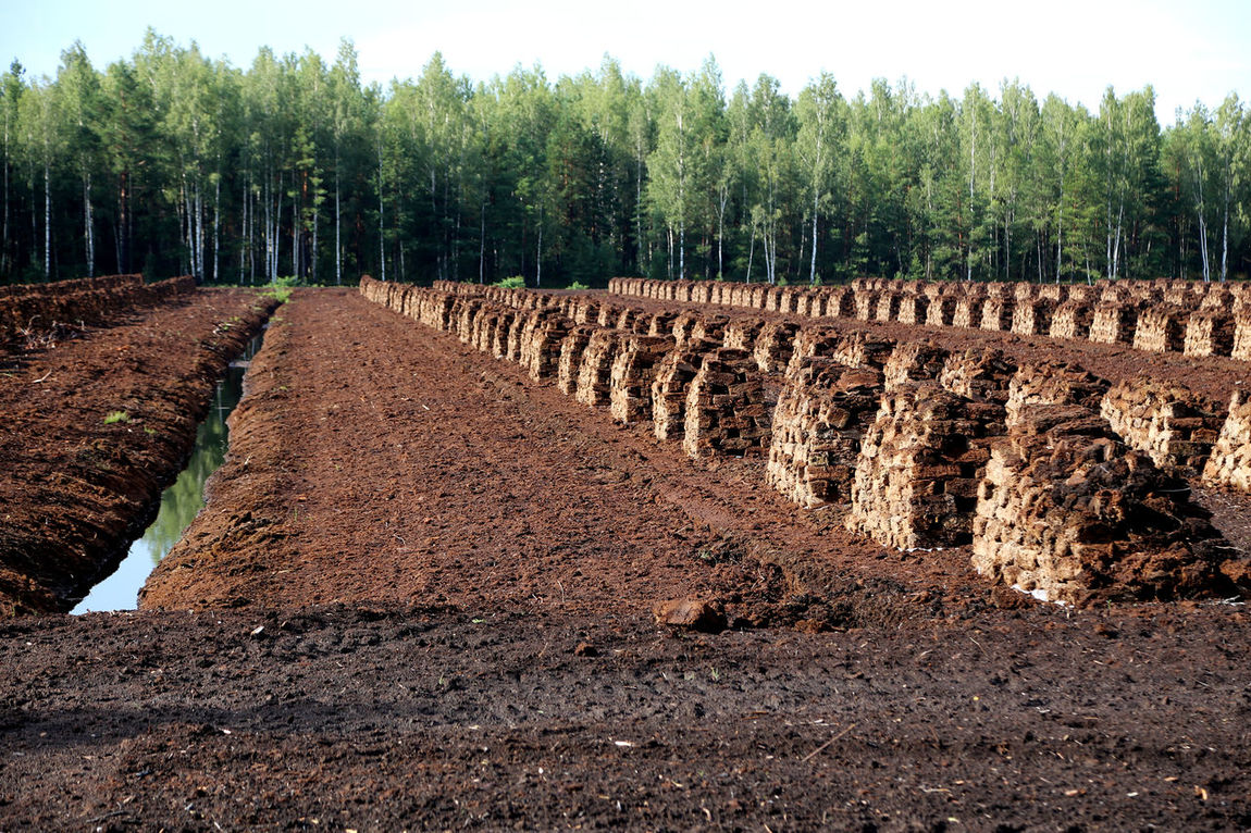 peat is stacked in rows waiting for transport in a forest in Latvia. Travelling Photography Torffabrik Wald Und Torf Swamp Torffeld Fossil Fuel Torfballen Evening Light Fossil Fuels Heating Period Peat Bog Lagerung Harvesting Peat Peat Mining Agriculture Peat Peat Field Renewable Energy Peat Extraction Bog Peat TorfabbauTravelling Lettland  Brennstoff Travelling The Baltic States