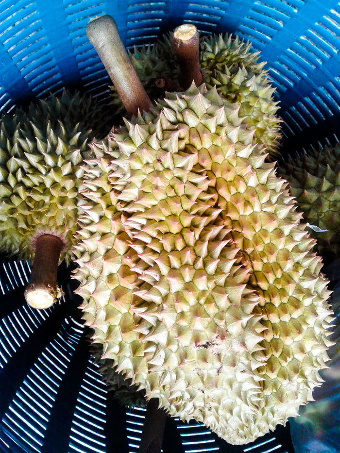 Durian Durian Cake Durian Crepe Durian Flowers Durian Fruit Durian Ice Durian Pancake Durians Durians Shop