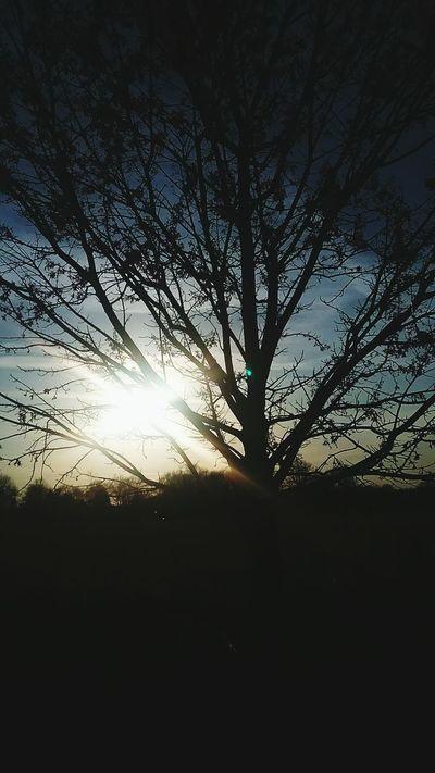 Nature Trees Blue Cloud Clouds And Sky Bright Sky Sun Streaks Sunshine Sun