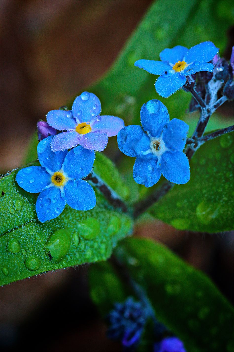 Flower Beauty In Nature Leaf Nature Growth Fragility Plant Close-up Green Color No People Blue Day Purple Outdoors Freshness Focus On Foreground Flower Head Water Forget Me Not Flowers