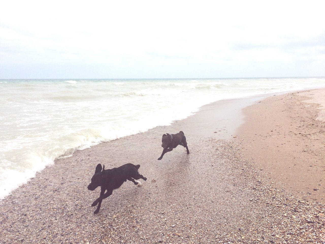 dog, beach, sea, pets, domestic animals, sand, mammal, animal themes, nature, water, horizon over water, running, one animal, no people, sky, outdoors, day, beauty in nature, scenics, full length