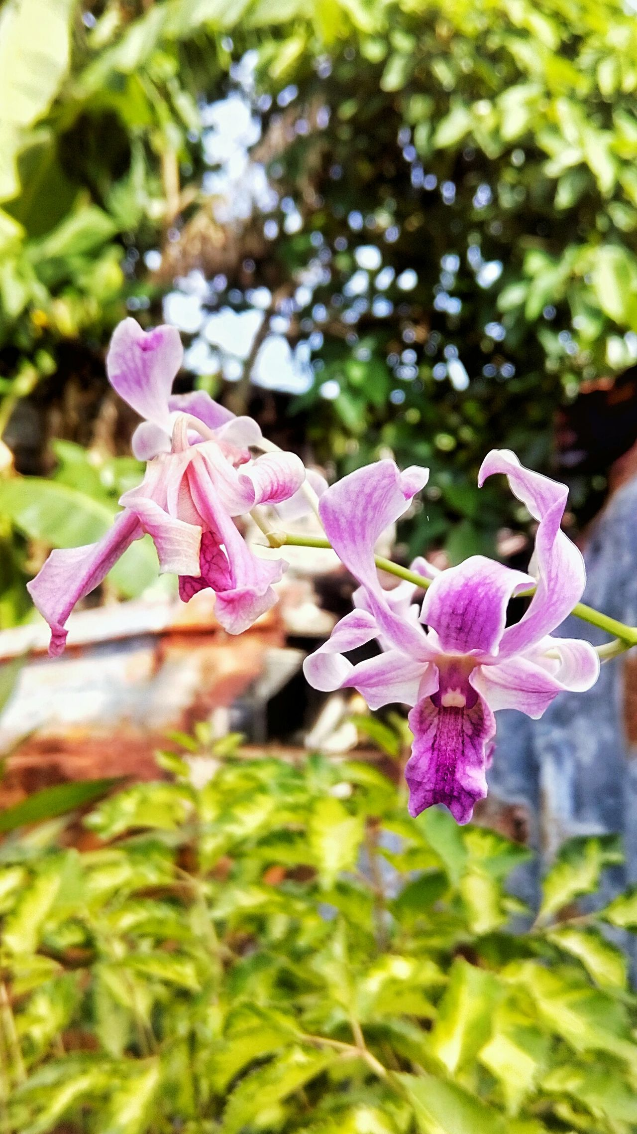 Orchid Flower Close-up Purple Petal Focus On Foreground