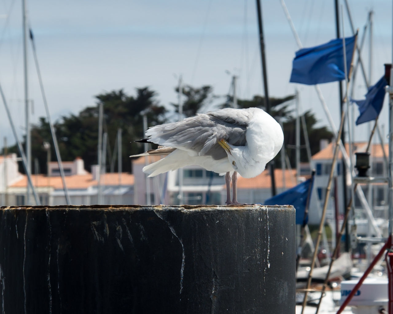 focus on foreground, no people, day, one animal, outdoors, water, animal wildlife, harbor, bird, animals in the wild, animal themes, close-up, nautical vessel, nature