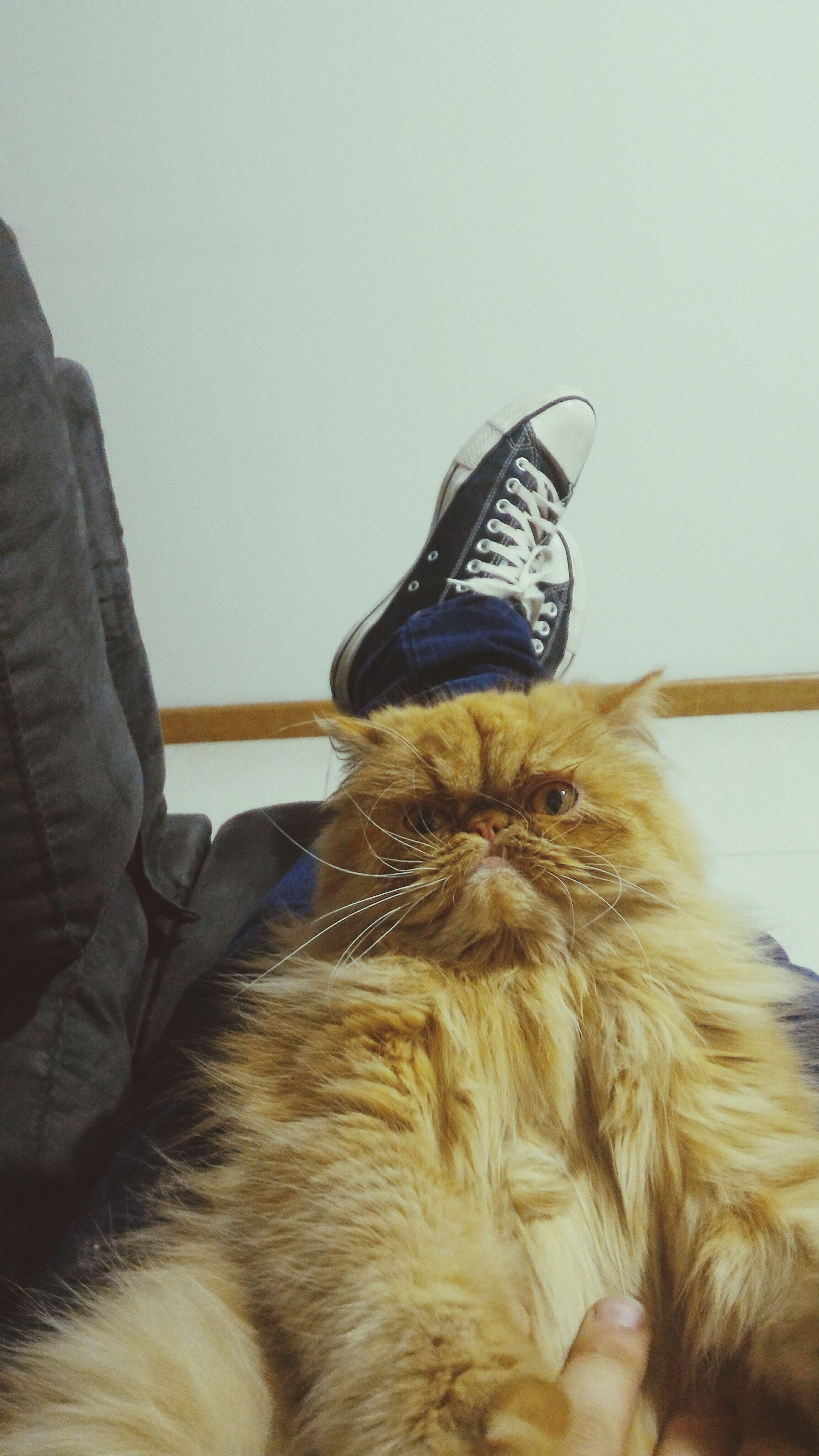 Cats Of EyeEm Cats 🐱 Animal Themes Domestic Animals . Hi I'm Safira Cats. First Eyeem Photo
