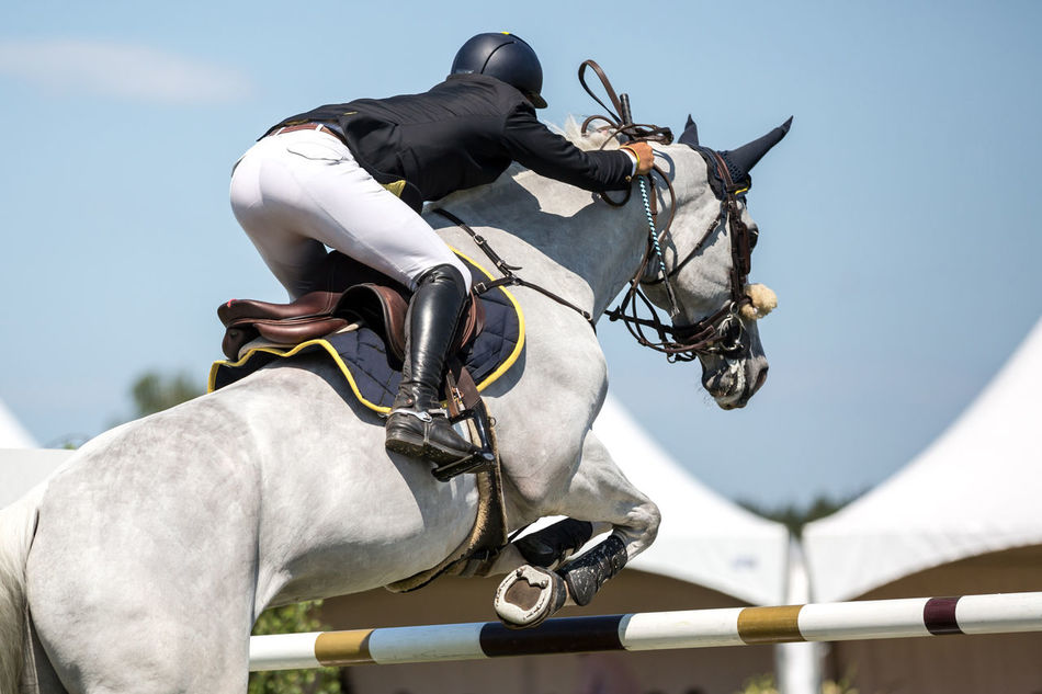 Arena Beautiful Champion Competition Course Day Equestrian Event Horse Horse Racing Horse Sport Horsejumping Horseman Jumping Looking Mammal Natural Obstacle Outdoors Riding Showjumping Sport Venue équitation