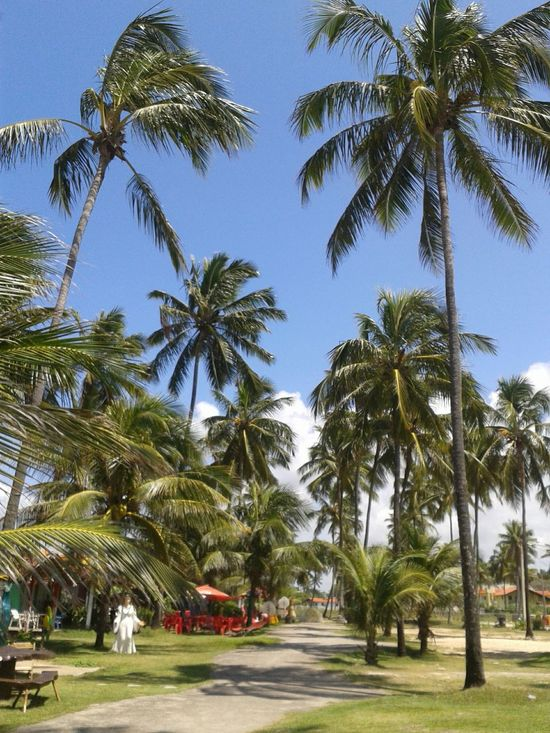 Beauiful Maracaipe beach :-) Beachphotography Beach Life Surfing Relaxing Getting A Tan Enjoying Life Palm Trees Summer Taking Photos Summer Views Life Is A Beach Coconut Trees