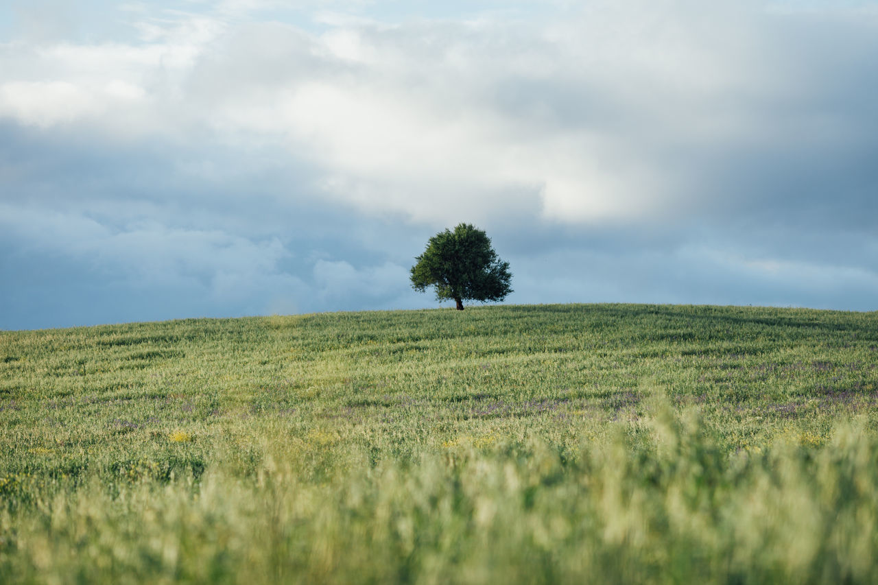 Agriculture Beauty In Nature Cloud - Sky Day Field Grass Green Color Growth Landscape Nature Nature No People Outdoors Rural Scene Scenics Sky Tranquil Scene Tranquility Tree Tree Wheat