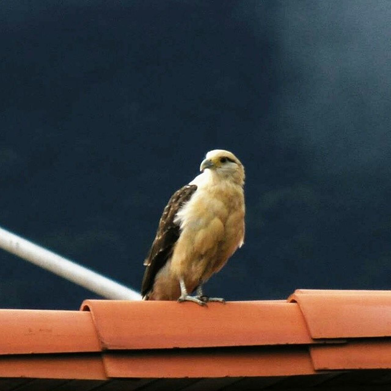 one animal, bird, animal themes, perching, animals in the wild, animal wildlife, no people, day, outdoors, close-up, nature