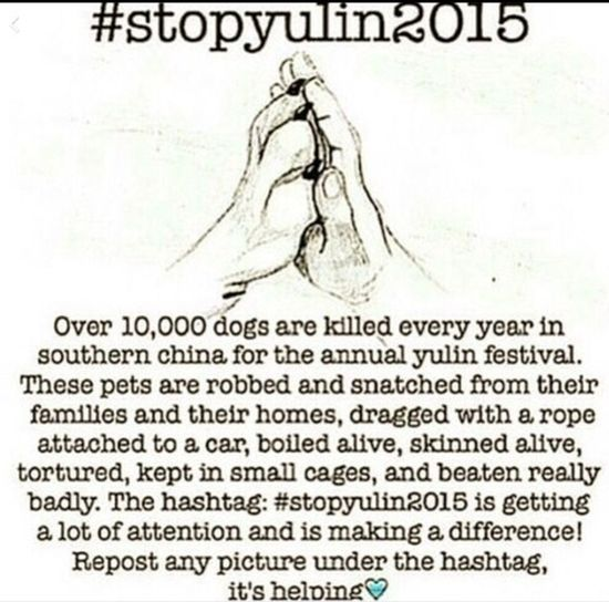 Stop Yulin 2015 Stop Yulin Festival 2015 Dog Abuse DogLove Dog Puppy Murder Hello World Check This Out Stopyulin2015 no more murder