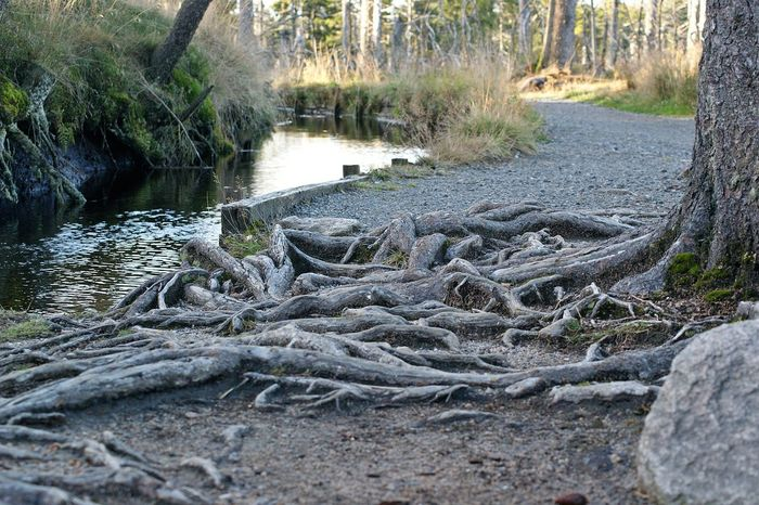 back to the roots Beauty In Nature Day Dead Tree Grass Growth Hello World Landscape Nature No People Non-urban Scene Outdoors Taking Photos Tranquil Scene Tranquility Tree Tree Trunk Water