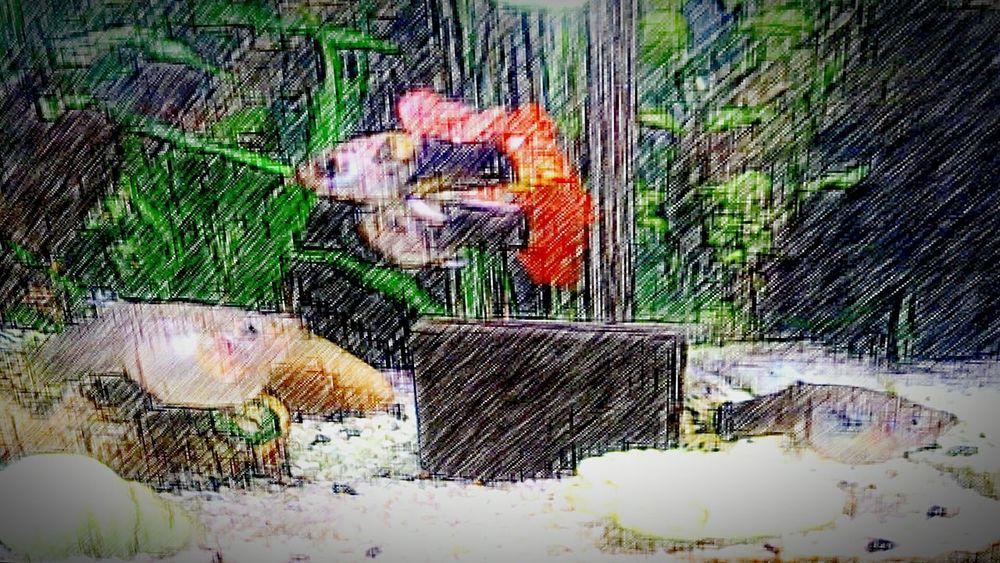 Głupiki Rybki Akwarium Ryby Fish Aqarium
