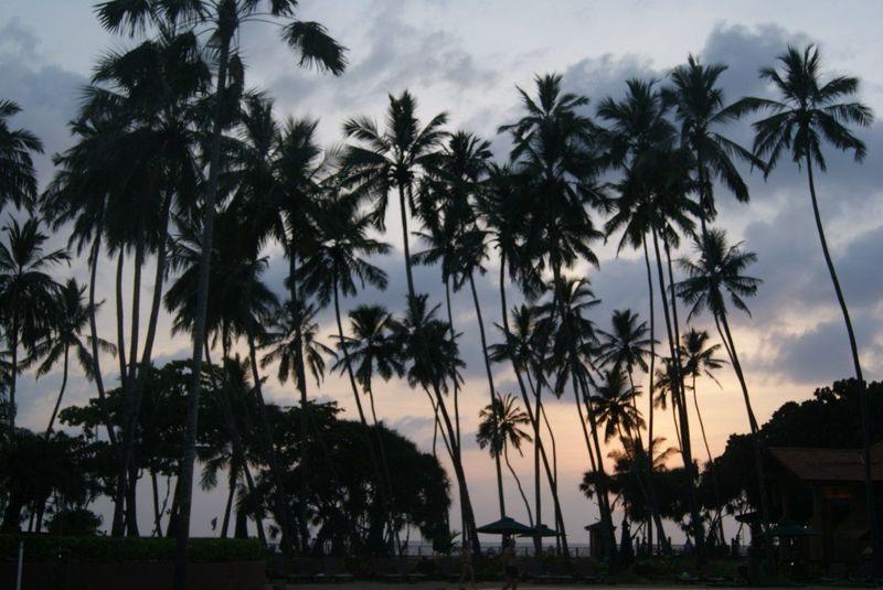 Maximum Closeness Индия пальмы пальмы вода First Eyeem Photo