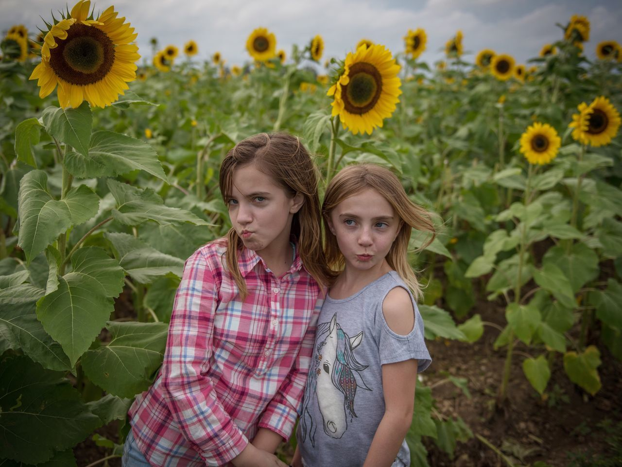 Beautiful stock photos of miami,  10-11 Years,  8-9 Years,  Agriculture,  Beauty In Nature