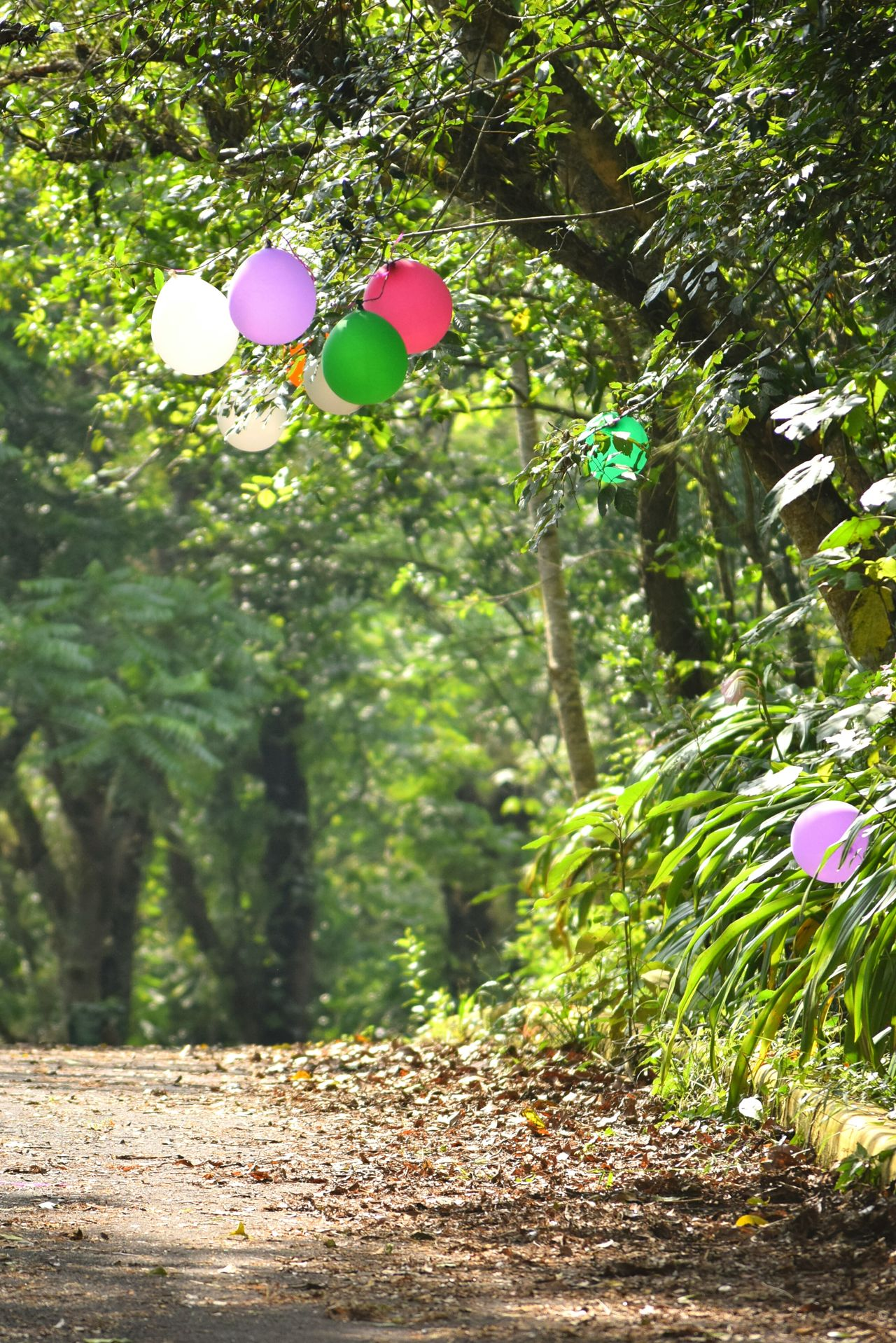 Tree Forest Outdoors No People Green Color Nature Day Sunny Day Tree Travel Nature Balloons Light And Shadow Way Path Road Urban Nature Park Sunshine Natural Light Leaf Leafs Life In Colors Freedom The City Light