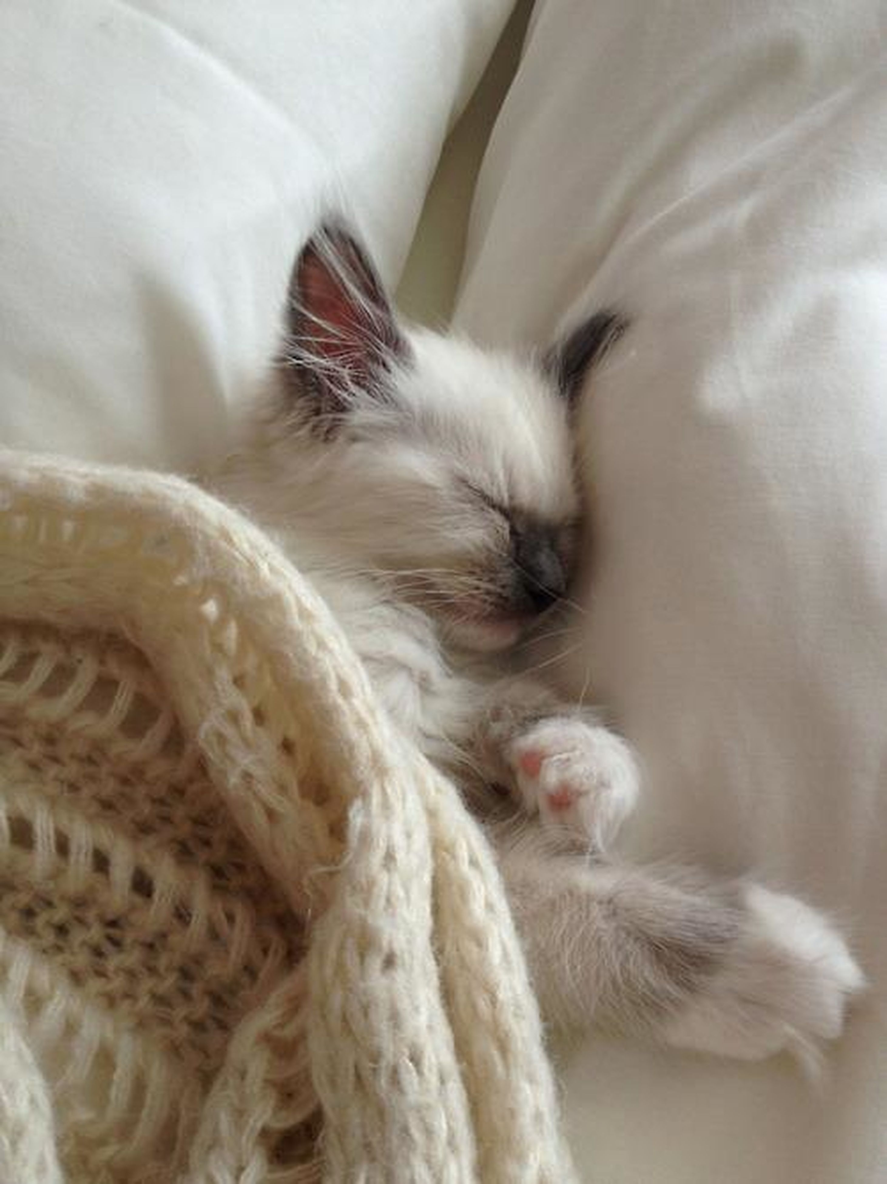 domestic animals, pets, animal themes, one animal, mammal, domestic cat, indoors, cat, relaxation, white color, feline, sleeping, resting, lying down, close-up, bed, whisker, high angle view, animal hair, eyes closed