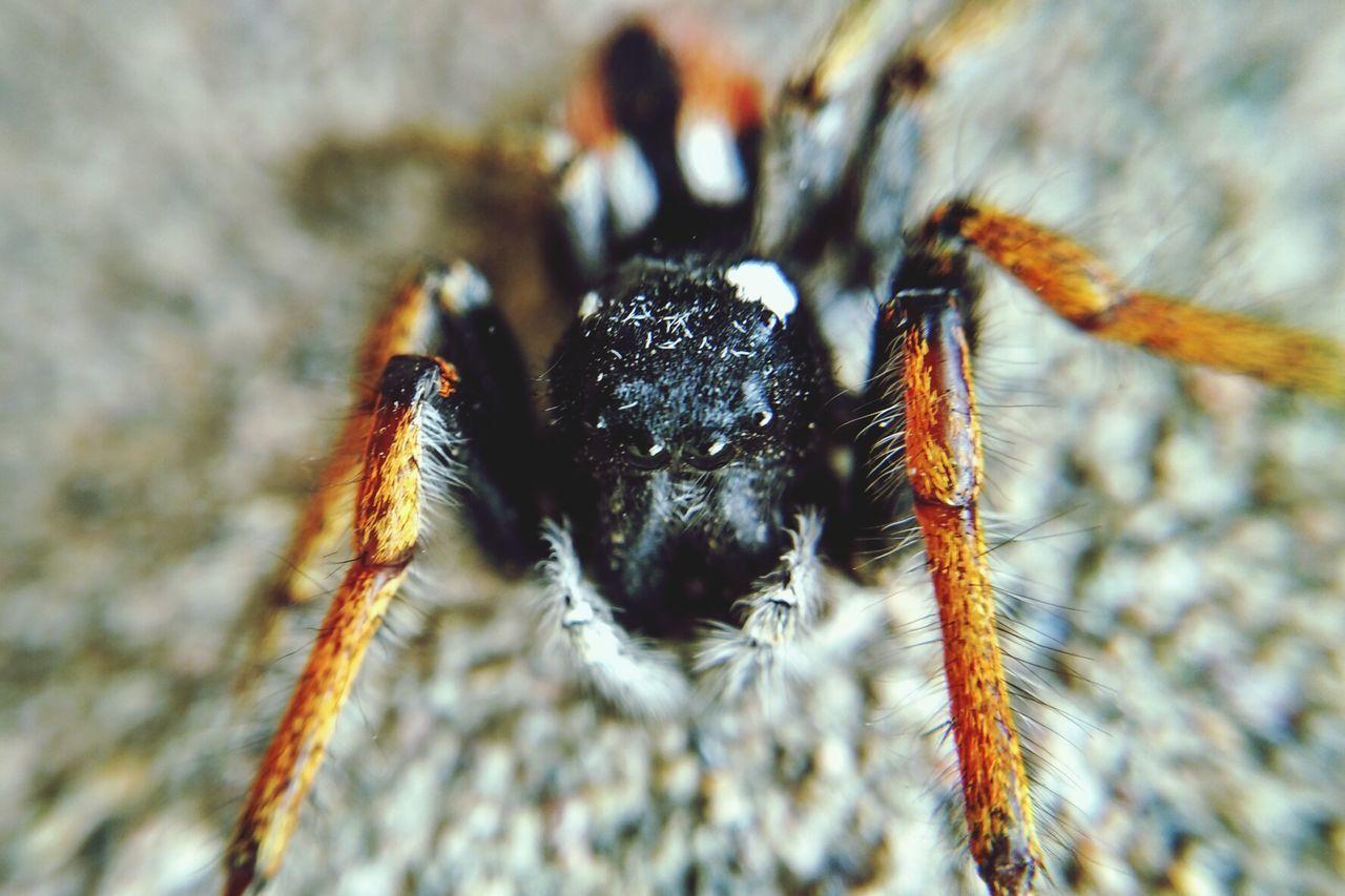 Macro Spider Macro Macro Photography Spider