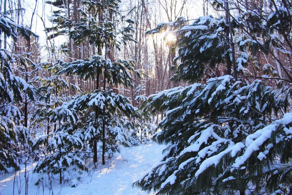 Beautiful stock photos of snow, Beauty In Nature, Covered, Covering, Day