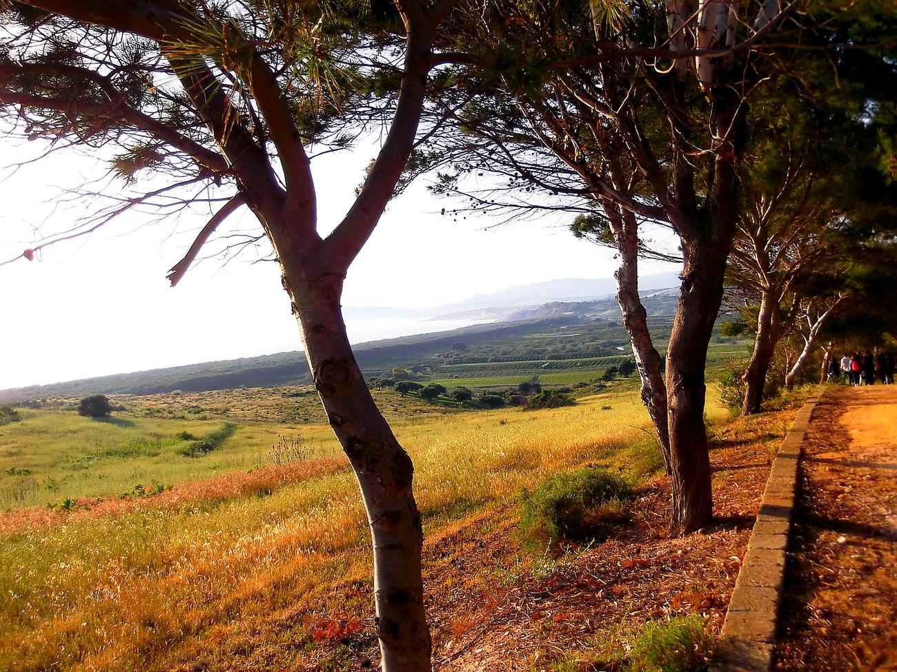 Agriculture Agrigento Alberi Albero Beauty In Nature Campi Colline Costa Erba Field Landscape Mare Nature Outdoors Rural Scene Sentiero Sicilia Tramonto Tranquil Scene Tranquility Tree