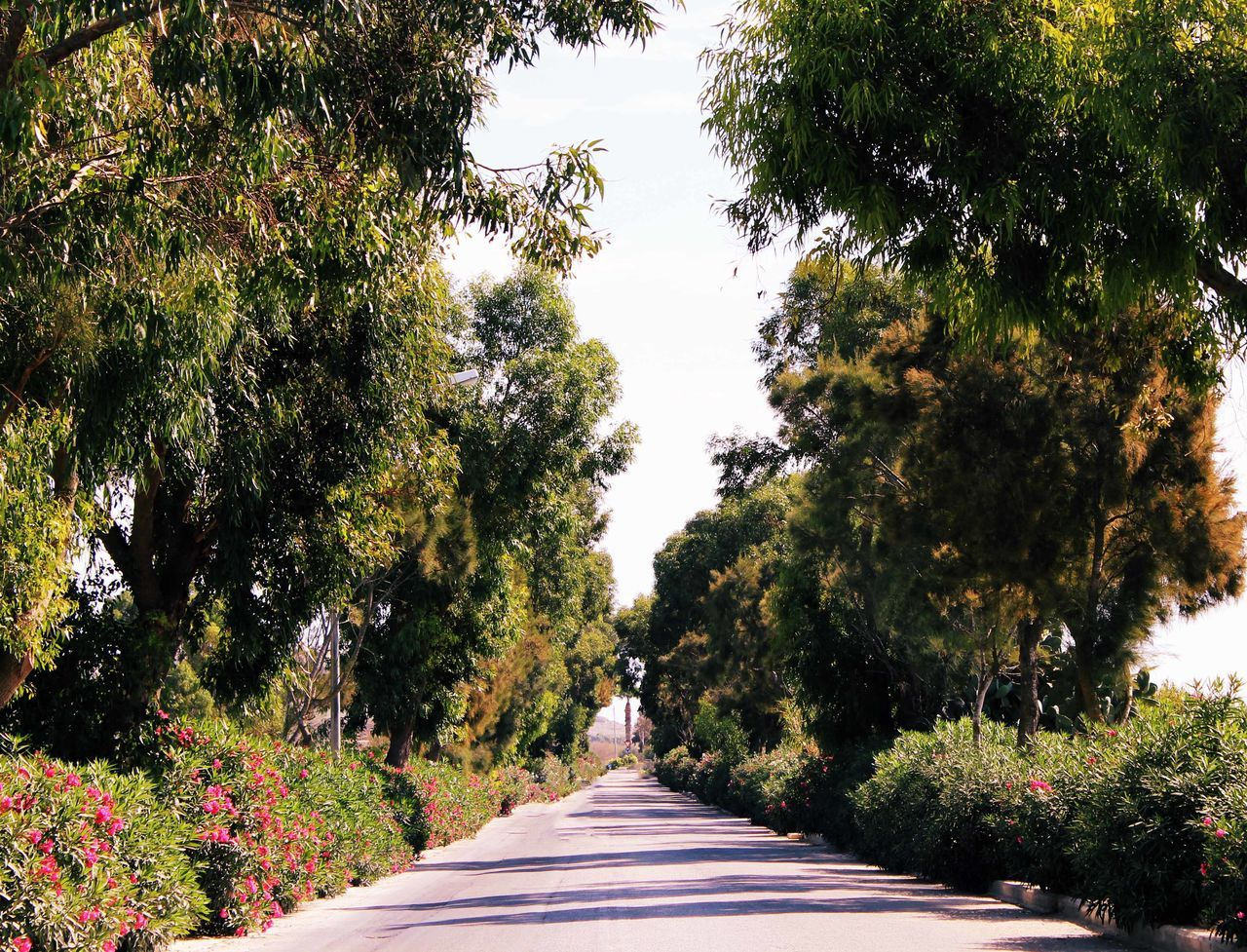 Beauty In Nature Clear Sky Day Diminishing Perspective Footpath Green Green Color Growth Long Narrow Nature Outdoors Park Park - Man Made Space Plant Scenics Sunny Surface Level The Way Forward Tranquil Scene Tranquility Tree Vanishing Point
